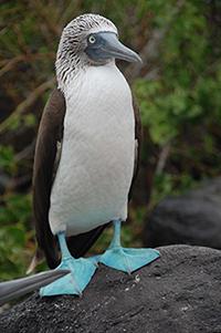 joann galapagos pic